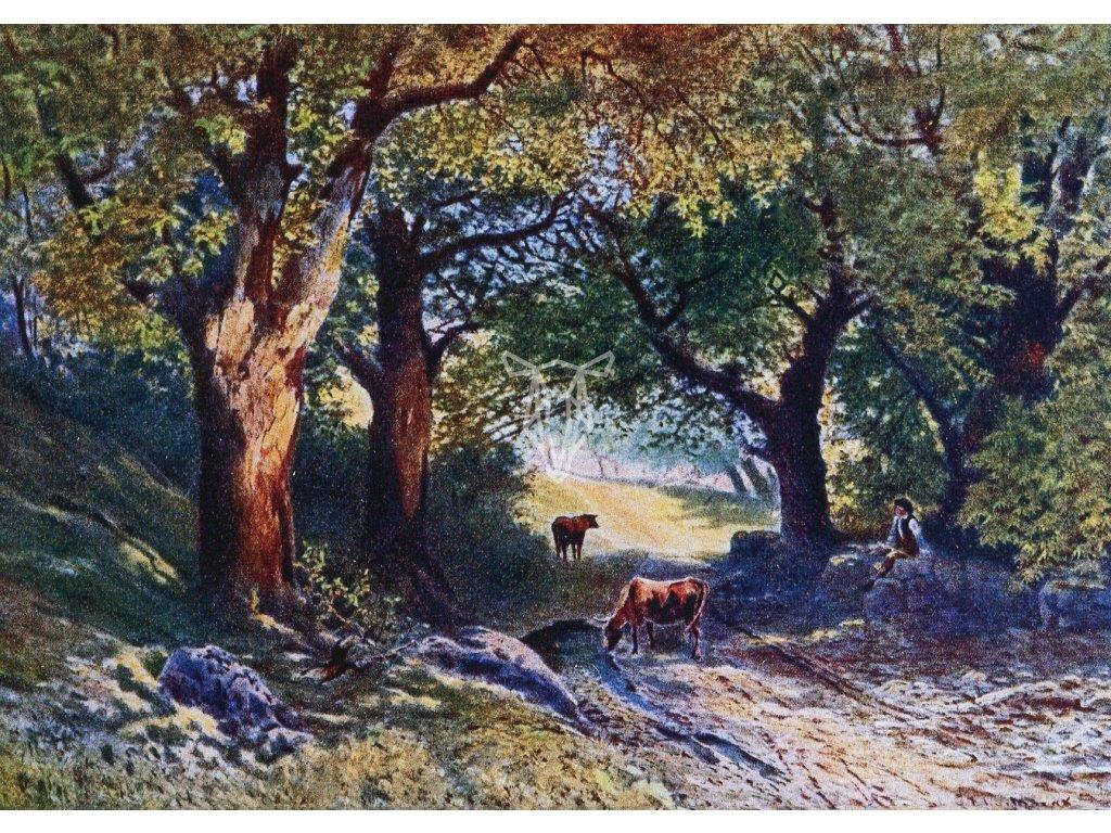 4604 2 pohlednice vnitrek lesa j marak