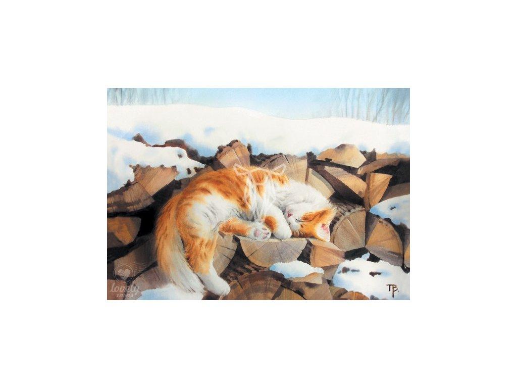 Pohlednice Kočičí sen