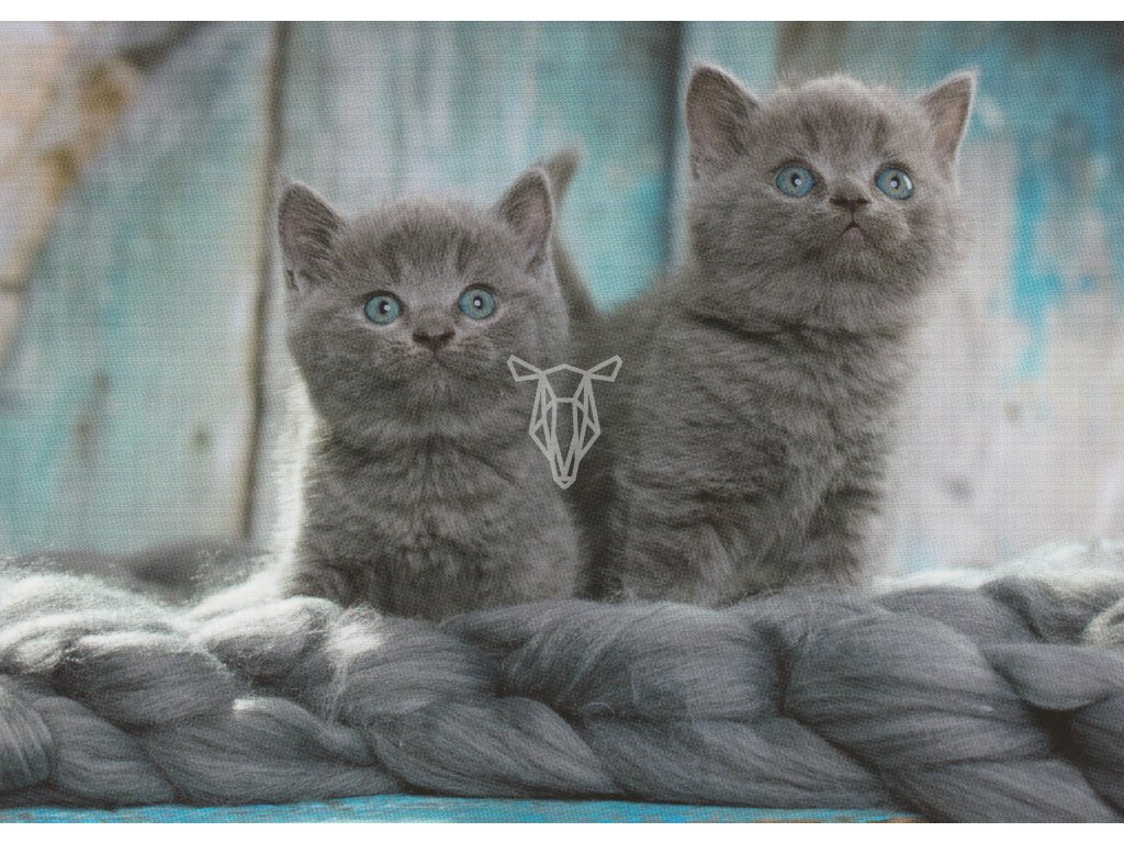 Pohlednice Koťata s modrým pozadím