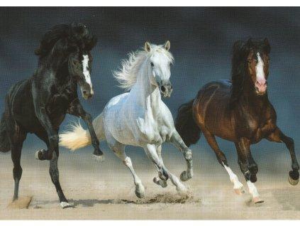 Pohlednice Tříbarevný koňský závod