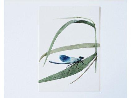 6975 pohlednice motylice(1)