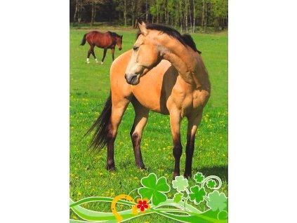 18905 pohlednice kone na pastve