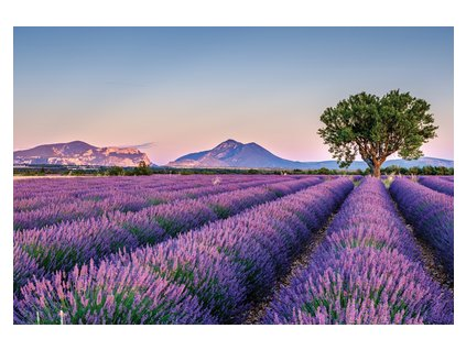 Lavender landscape with the tree width400 3