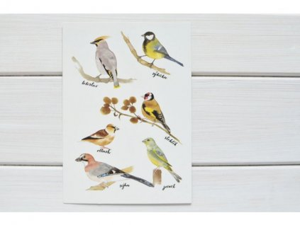 3740 pohlednice ptacci1(1)
