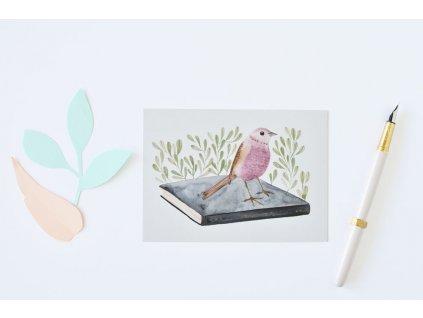 4667 2 pohlednice ptacek