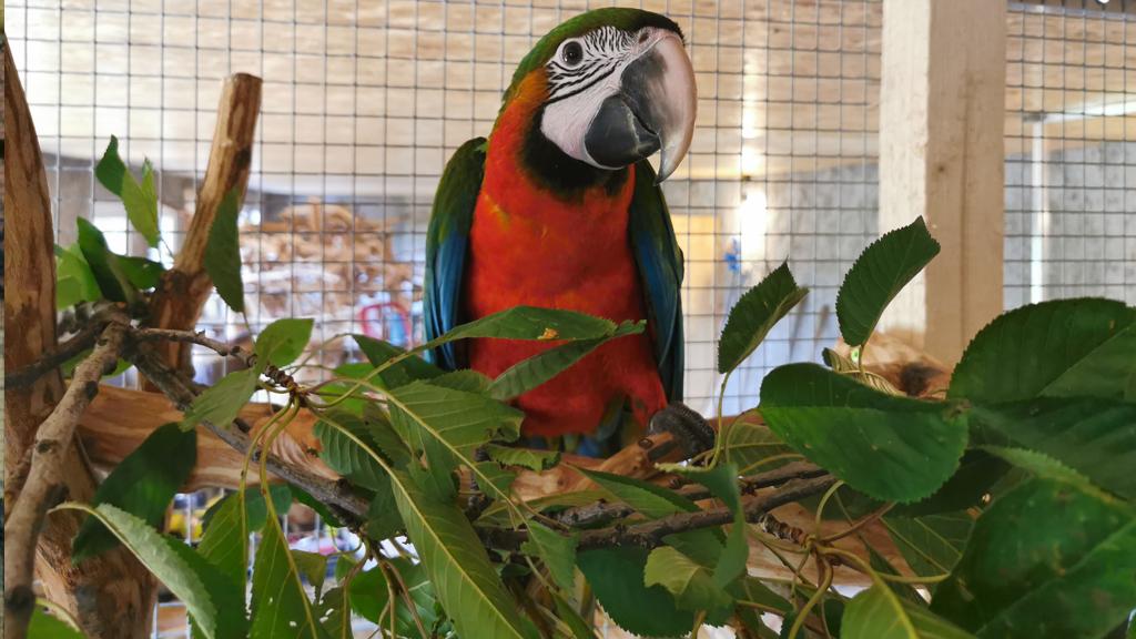 Rodina papoušků v České republice