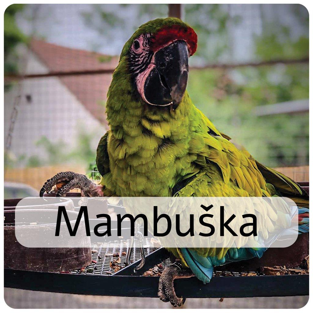 mambuška