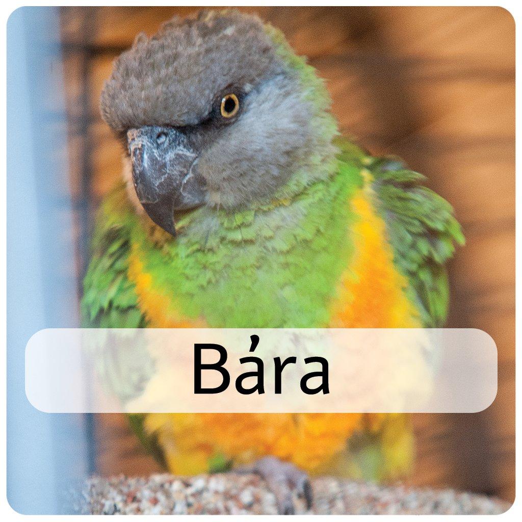 bára 2