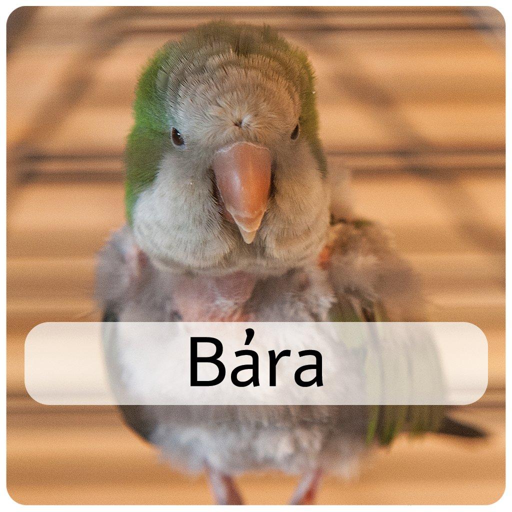 bára 3