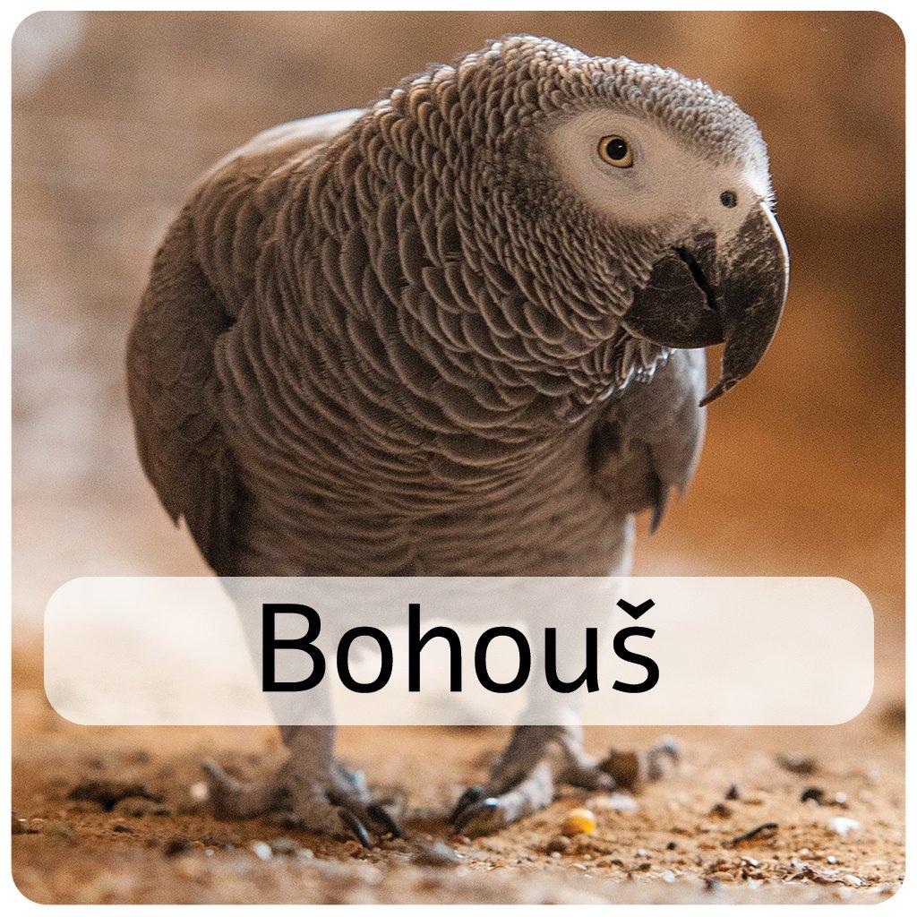 bohouš