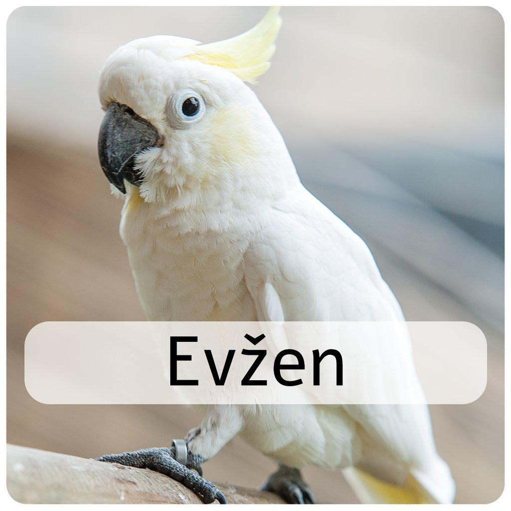 evžen2