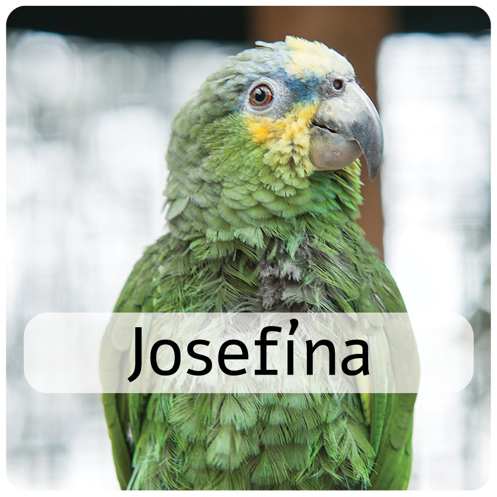 josefína