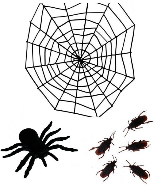 Pavouci, pavučiny, hmyz, brouci, krysy