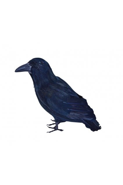 Havran Rumburak - vrána 30cm