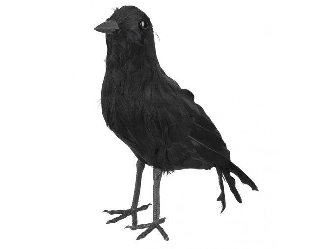 Černá vrána dekorace
