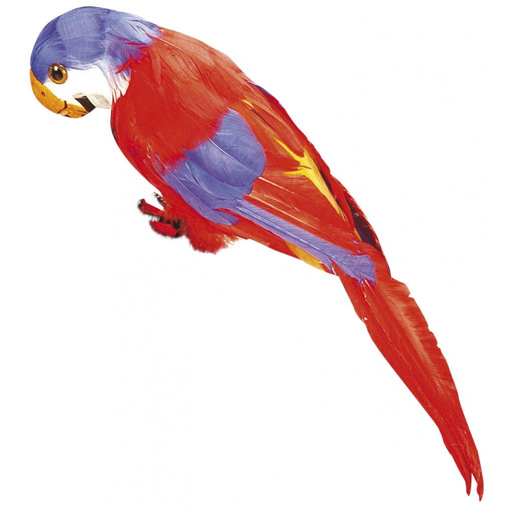 Pirátský papoušek červený