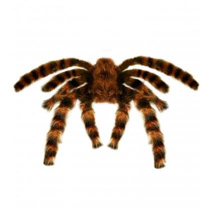 Gumový pavouk