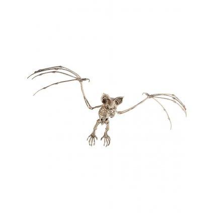 Kostra netopýra