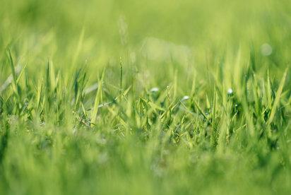 Vše o hnojení trávníku: kdy, čím a jak často hnojit?