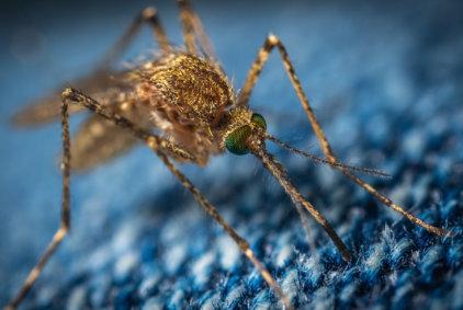 Vražedný komár: 14 nejzajímavějších faktů o komárech