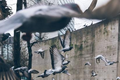 Jak vyhnat holuby