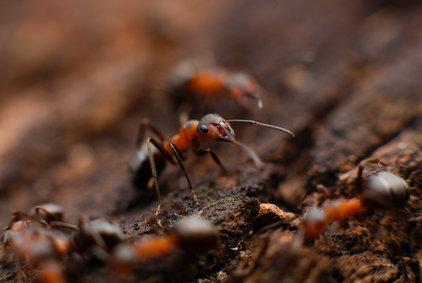 Jak se zbavit mravenců: 21 nejlepších metod