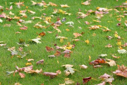 7 tipů pro podzimní hnojení trávníku