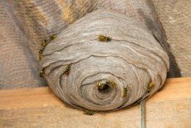 Jak bezpečně zlikvidovat vosí hnízdo svépomocí?