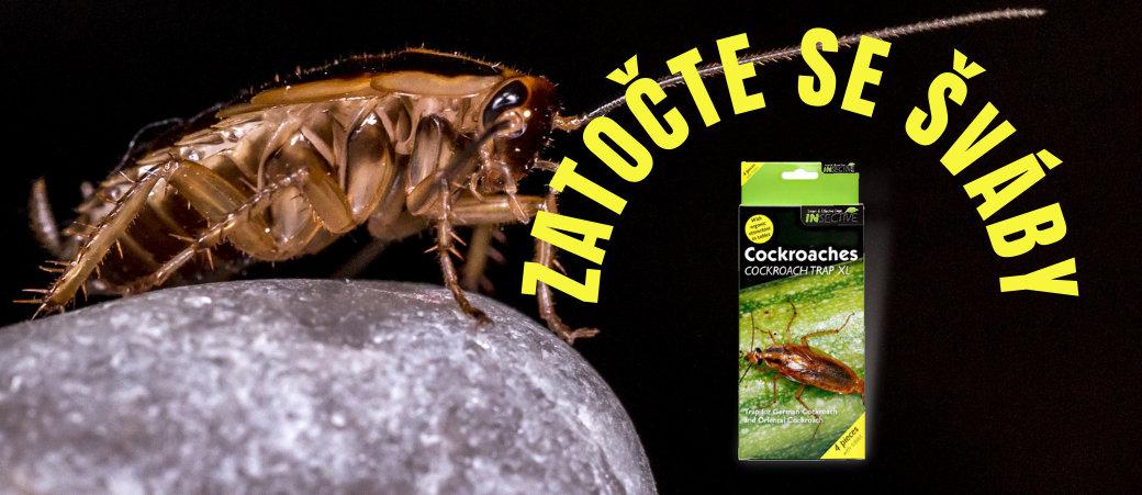 Zbavte se švábů pomocí lepové pasti
