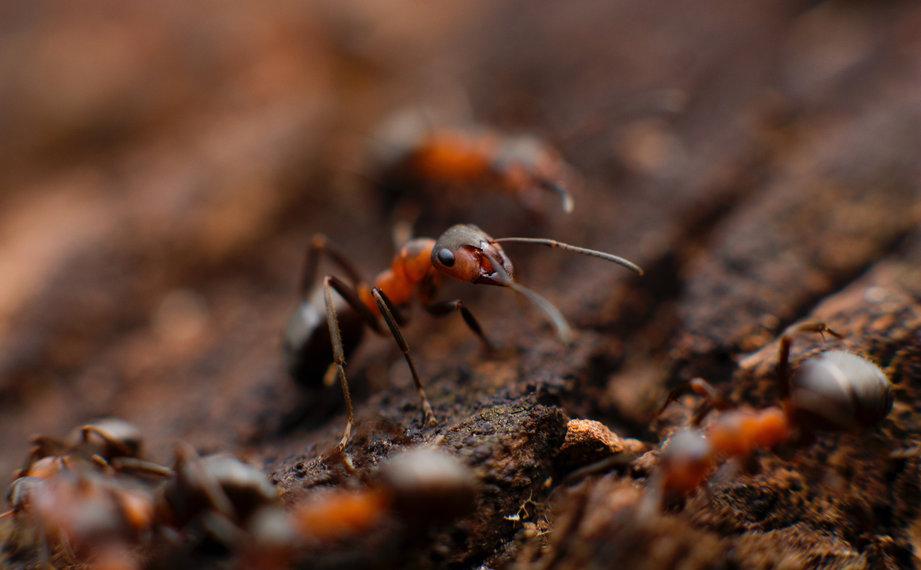 detail-mravence
