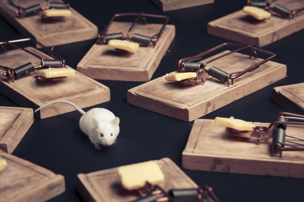 Důležité je past na myši správně umístit