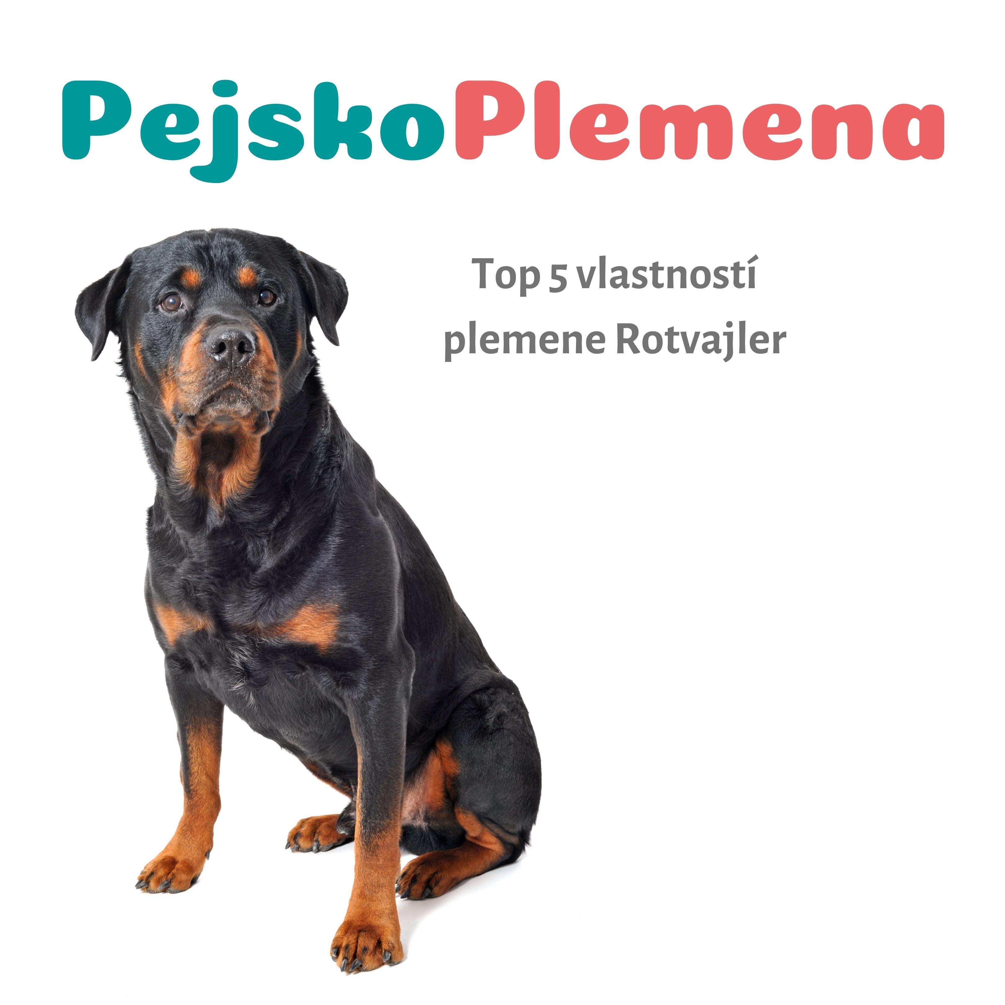 Rotvajler a jeho TOP 5 skvělých vlastností