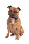 pelechy pre stredných psov