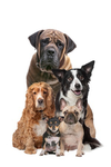 matrace pre psy
