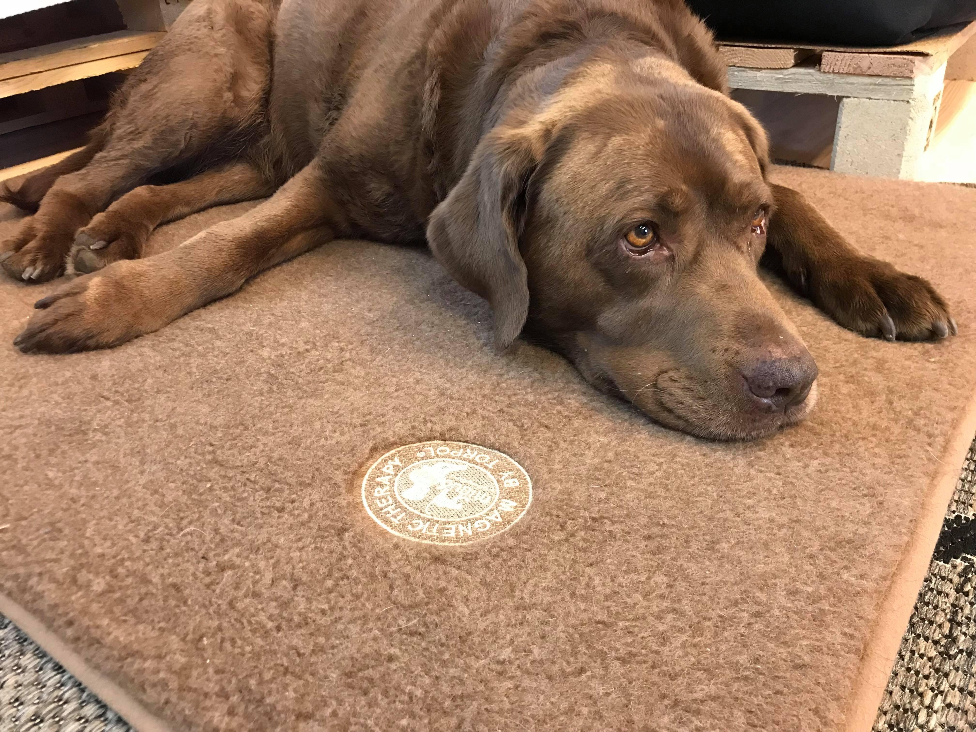 Magnetická terapie pro psy