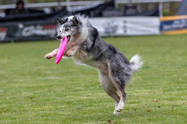 Dogfrisbee - zábava pro vás i vašeho psa