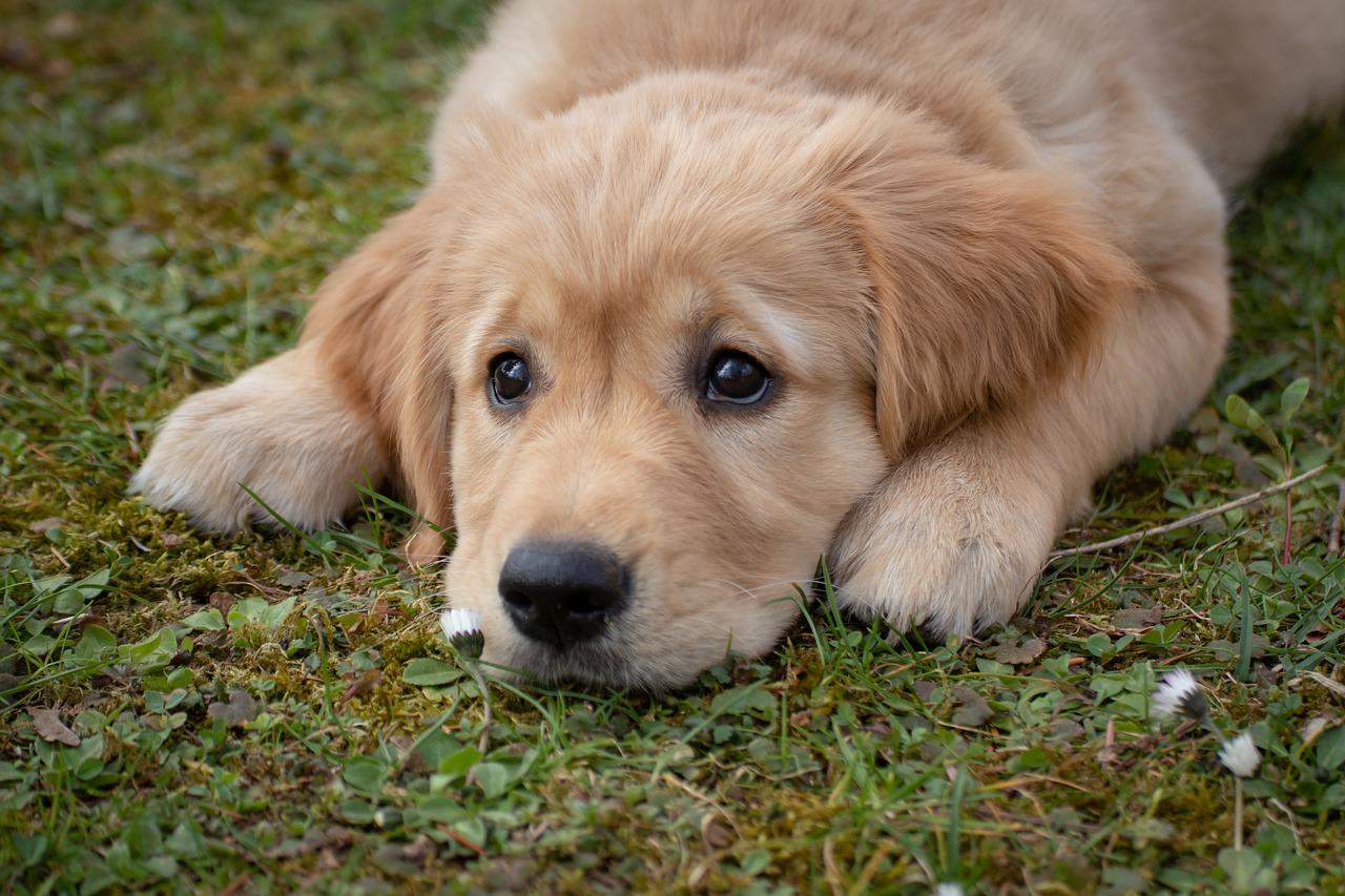 Jak vybrat nového psího člena rodiny?