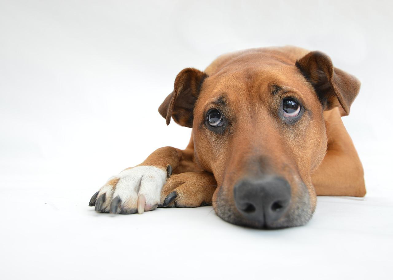 Jak překonat psí nachlazení?