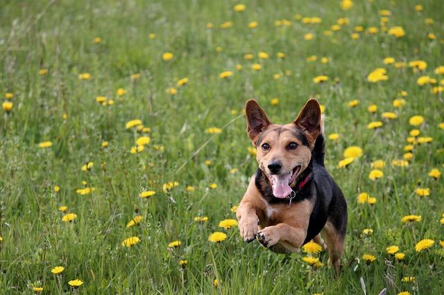 Alergie může potrápit i psy