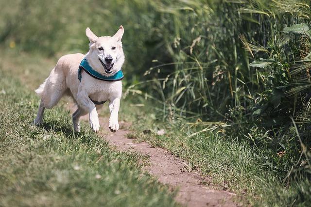 Vyběhněte letos i se svým psem aneb canicross v roce 2019