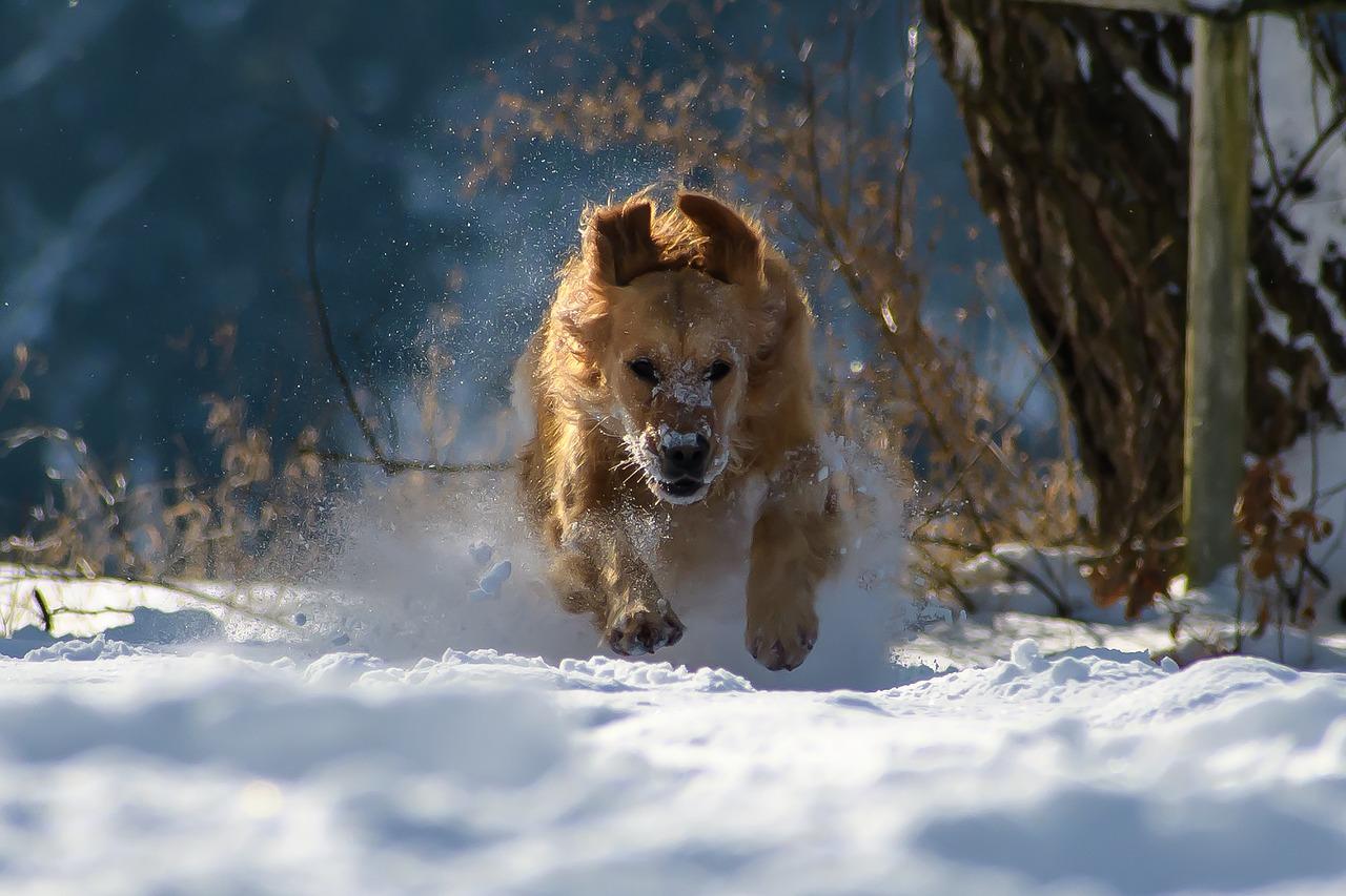 Za krásami zimních Krkonoš se psem