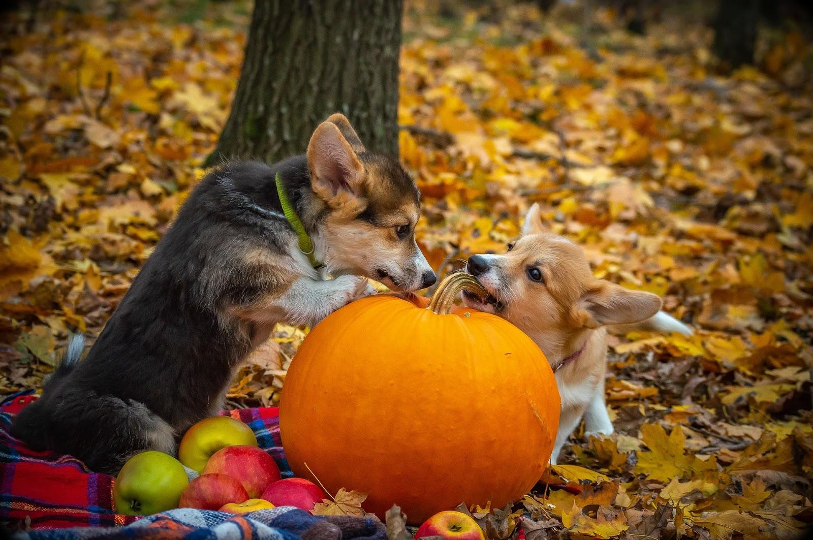 Jak podpořit psovi imunitu?