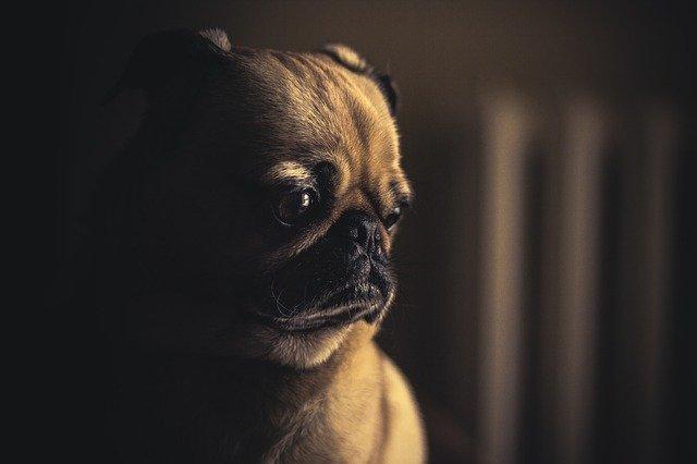 Na co nezapomínat při péči o psa