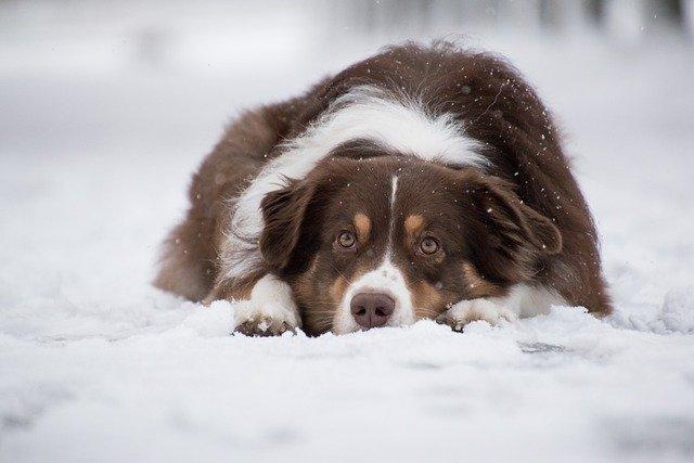 5 tipů na zimní aktivity se psem