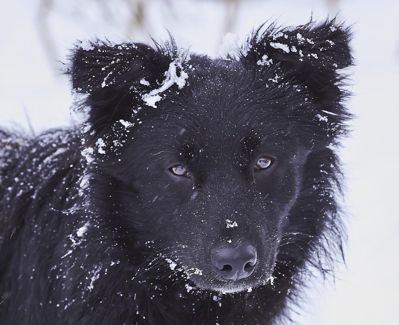 Zimní výlet se psem