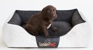 hobbydog