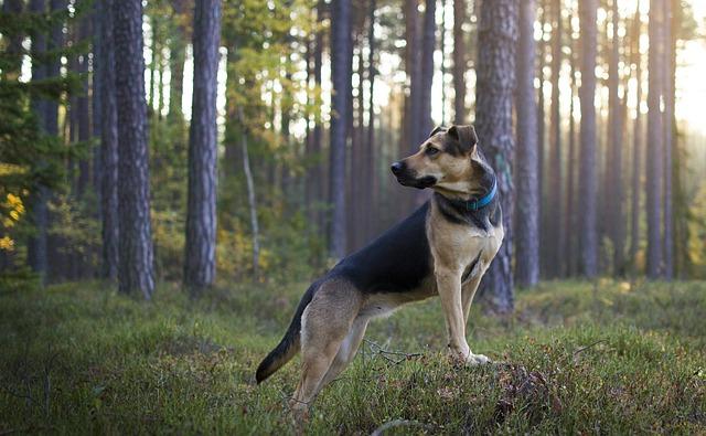 pes-prochazka