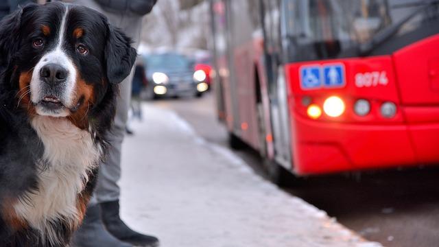 pes-v-autobuse