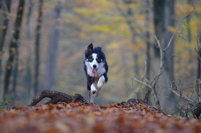pes-v-lese
