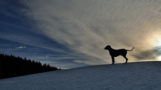 pes-v-zime